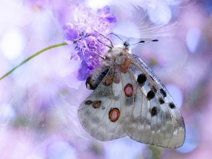 butterfly-620842_1920